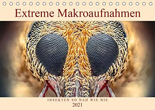 Extreme Makroaufnahmen - Insekten so nah wie nie (Tischkalender 2021 DIN A5 quer)