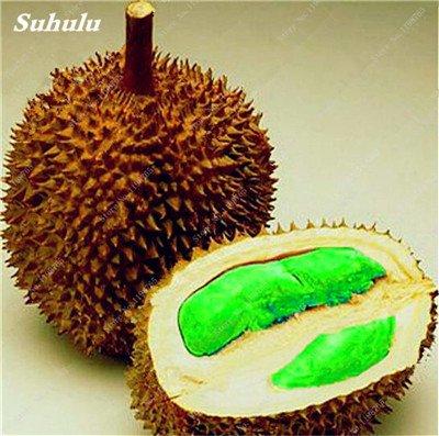 5 pièces Heirloom Seeds Durian Outdoor Non-GMO fruits Bonsai juteux organique des plantes Bonsaï Sementes si délicieux aliments sains 2
