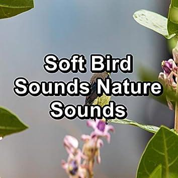 Soft Bird Sounds Nature Sounds