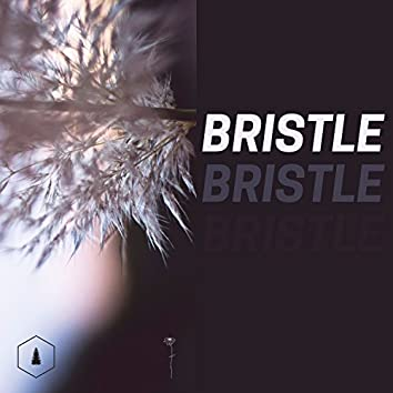 Bristle