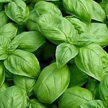 Basil Seeds - Large Leaf Italian Sweet Basil Heirloom Seeds ► Organic Non-GMO Basil Seeds (100+ Seeds) ◄ by PowerGrow Systems