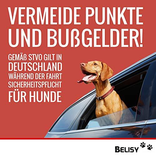 BELISY Hunde-Sicherheits-Gurt fürs Auto - 7