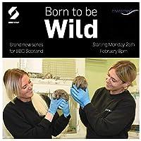 Born to be Wild(2019)ポスターとプリントTVシリーズファッショントレンド美しいホームアート装飾ポスター壁装飾ギフト-24x36インチフレームなし