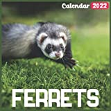Ferrets Calendar 2022: Official Ferrets Calendar 2022, 18 Month Photo of Ferrets calendar 2022, Mini Calendar