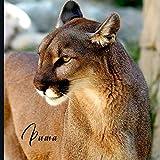 Puma: 2021 Monthly Photo Calendar | January 2021 - December 2021 | Monthly Calendar with U.S./UK/ Canadian/Christian/Jewish/Muslim Holidays | Mountain Lion Photo Calendar