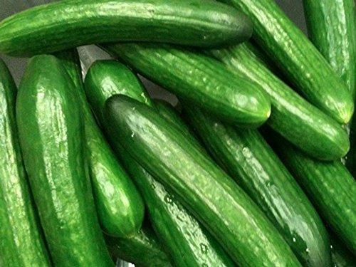 Concombre à salade - Moneta - Sans amertume - 30 graines