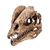 Generic 1/3 Skala Dinosaurier Dilophosaurus Harz Schädel Figur Modell Sammler - Weiß -