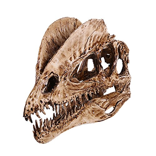 Dinosaur Dilophosaurus Skull Replica Skeleton Model Aquarium Ornament Home Decor 2 Color Pick - White, 18cm