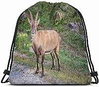 若いかわいいビッグホーン羊スタンド動物野生動物動物巾着バックパックバッグ子供男の子女の子十代の誕生日、ギフトストリングバッグジムシンチサック学校とパーティー