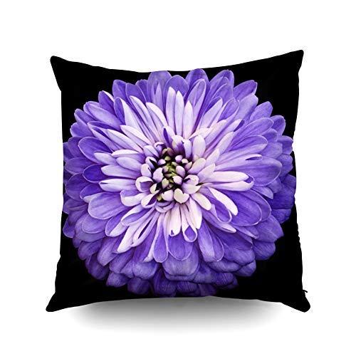 WH-CLA Throw Pillow Covers Holiday Crisantemo Flor Morada En El Negro Trazado De Recorte Aislado Primer Plano No Blanco Rosa Fundas De Almohada Cremallera Regalo De Cumpleaños Funda De A