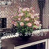 フラワーポットプラント100個12のためのカーネーションの種Caryophyllus Flowerss Semillas鉢植えレアM愛の花