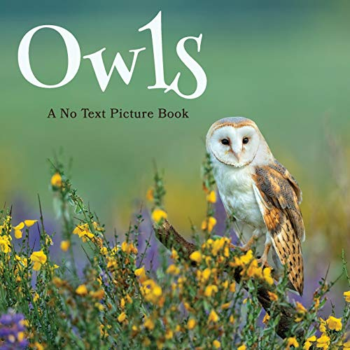 Owls, A No Text Picture Book: A Calming Gift for Alzheimer Patients and...