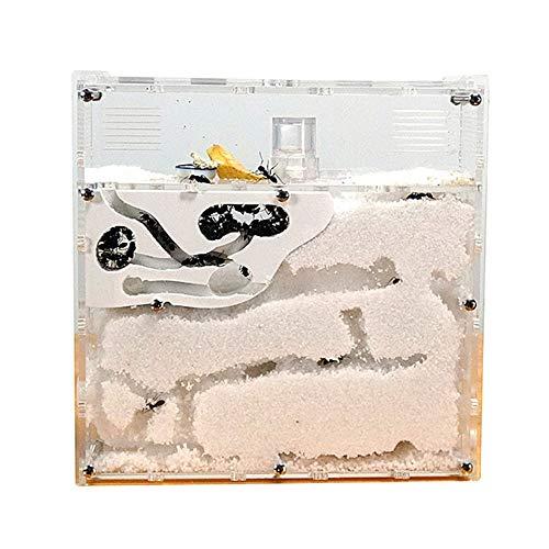 Jnzr Ameisenfarm Schloss Naturinsekt Eco Box, Stammesameisen Werkstatt Kinderspielzeug Kunststoff Ameise Lernhaus 3D Labyrinth Ameisen Bildung für lebende Ameisen