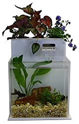 Fin To Flower – Aquaponics System