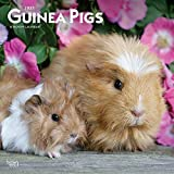 Guinea Pigs 2021 12 x 12 Inch Monthly Square Wall Calendar, Domestic Animals Small Pets