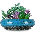 6.1 Inch Large Shallow Succulent Planter Pots with Drainage Hole Round Ceramic Bonsai Pots Garden Decorative Glazed Cactus Flower Plant Container Bowl