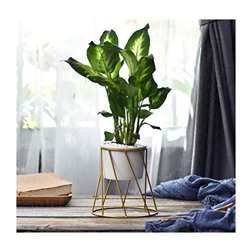 Khkfg Triangle nordique simple or noir géométrique succulente plante verte fer cadre bureau décoration de la maison pot de fleur décoratif (Couleur : G)
