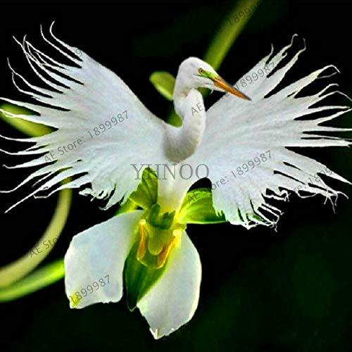 PLAT FIRM Germinación de las semillas: White japonesa Habenaria radiata Egret Semillas Flor de la orquídea - Rare - exótico