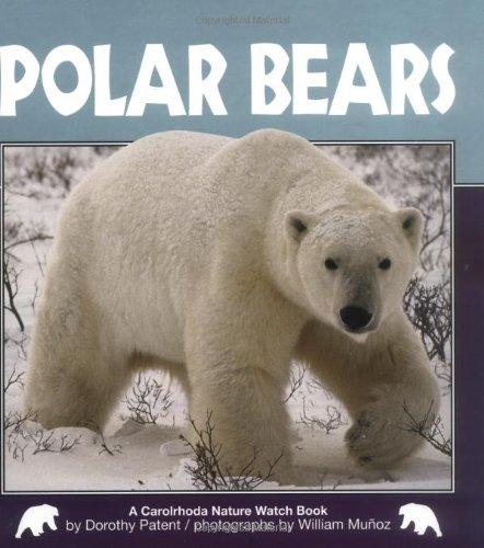 Polar Bears (Nature Watch)