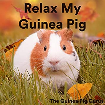 Relax My Guinea Pig