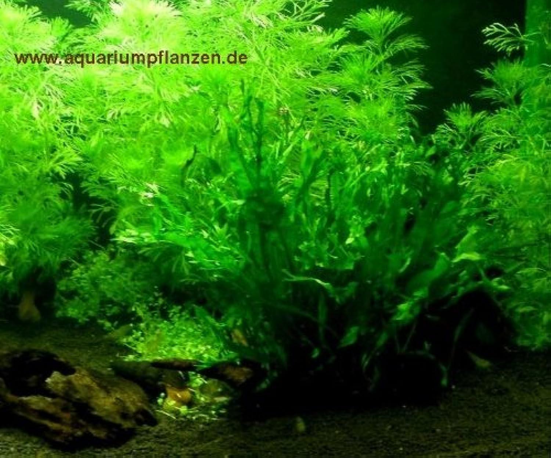 Aquarium Set for 100 l, plants, gravel, decorative items (XV)