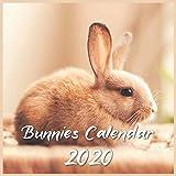 Bunnies Calendar 2020: 12 Month Calendar