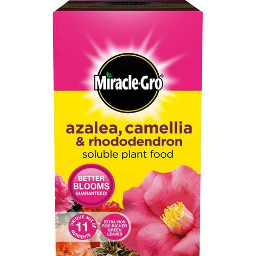 Scotts Miracle-Gro-& rododendri, azalee camelia-Concime per piante solubile, 500 g