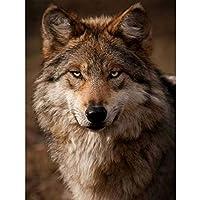 動物フルスクエア5DDIYダイヤモンド絵画オオカミダイヤモンド刺繡5Dラインストーンモザイク写真家の装飾