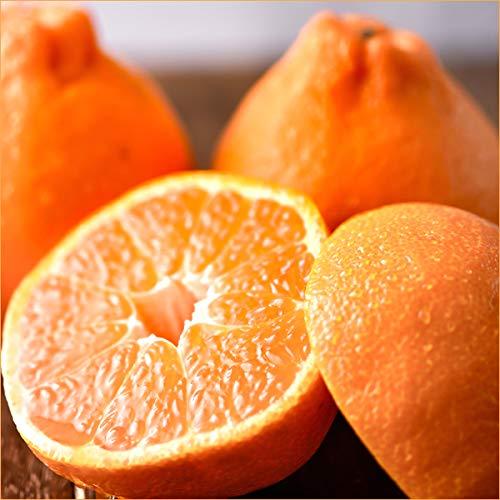 愛媛県産 柑橘 みかん 不知火 5kg(共選 秀品/16〜24玉入り) 柑橘類 みかん ミカン 蜜柑 果物 フルーツ お取り寄せ