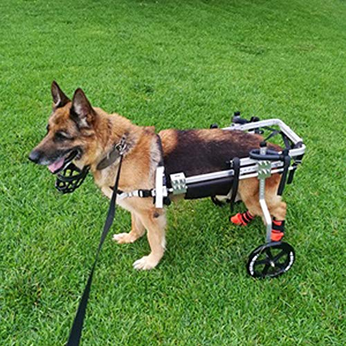Rimorchi Passeggini Sedia a Rotelle per la Riabilitazione delle Zampe Posteriori di Cane, Carrello per Cani Anziani Feriti Disabili, Carrellino per Cane di Grossa Taglia 20-35 kg