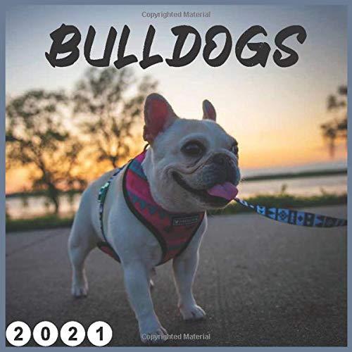 bulldogs: 2021 wall & Office Calendar 16 Monthe,