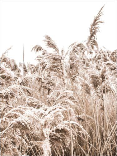 Poster 50 x 70 cm: Goldenes Gras III von Magda Izzard - hochwertiger Kunstdruck, neues Kunstposter