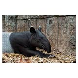 Wooden Puzzle 1000 Pieces Malayan tapirs Jigsaw Puzzles for Children or Adults Educational Toys Decompression Game
