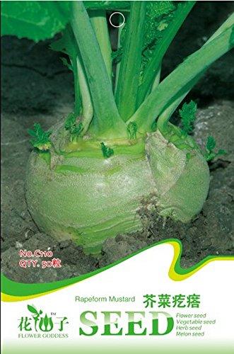 30 pcs/sac Crowndaisy Graines de chrysanthème, chinois Graines de légumes