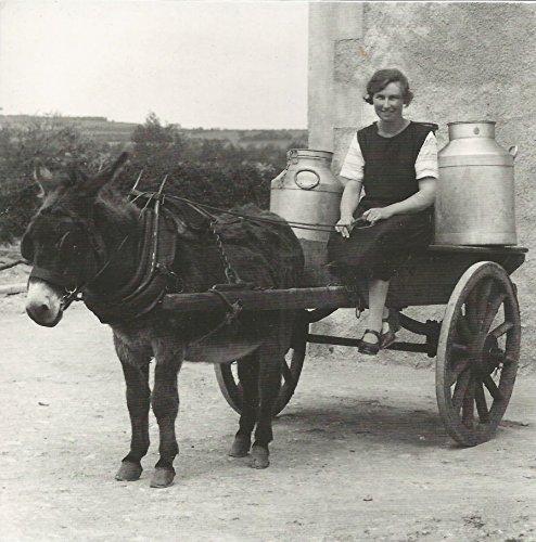Donkey leche carro Kilmeaden quesería Co Waterford Irlanda Eire cualquier ocasión Tarjeta