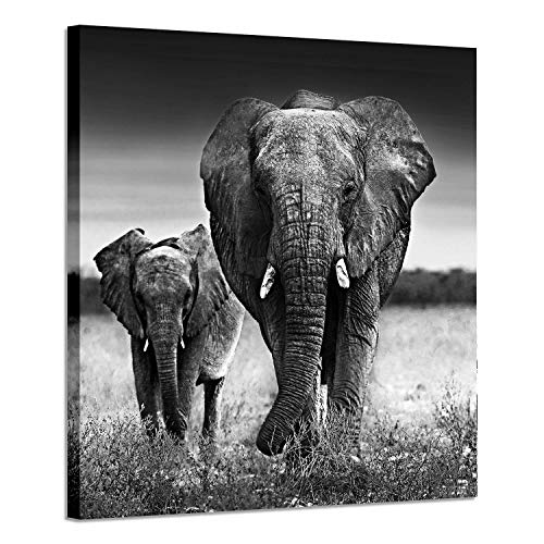 Elephant Pictures Art Wall Decor: Photographic Arts The Love of The Elephant Mama and Baby Print on Canvas in Black and White (28' x 28')