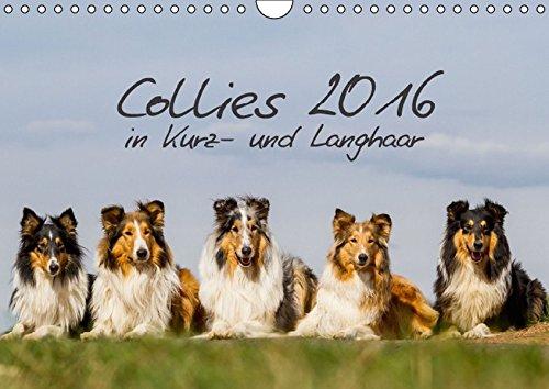 Collies 2016 in Kurz- und Langhaar (Wandkalender 2016 DIN A4 quer): Ein Kalender für alle Collie- und Hundefreunde (Monatskalender, 14 Seiten ) (CALVENDO Tiere)