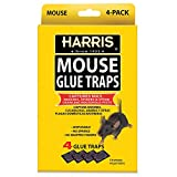 Harris Pre-Baited Mouse Glue Traps, Fully Disposable...
