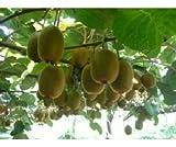 20 Mini Cocktail Kiwi Samen, selbstfruchtend, schnellwüchsig, eigene Kiwi Ernte