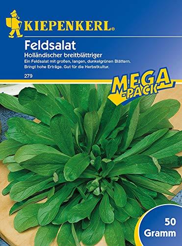 Sperli 279 Gemüsesamen Feldsalat Holländischer breitblättriger, grün