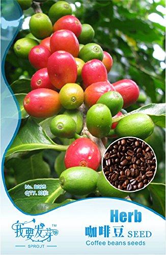 1 Original-Pack, 10 Samen / pack, Coffee Bean Samen, Arabica-Kaffeepflanze (Coffea Arabica Catura) SEEDS # NF247
