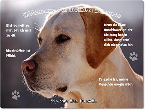 Merchandise for Fans Blechschild/Warnschild/Türschild - Aluminium - 30x20cm - - Willkommen in Meinem Zuhause - Motiv: Golden Retriever/Labrador Porträt- 06