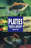 Platies, Keeping & Breeding Them in Captivity