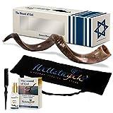 halleluyah set shofar –mezzo lucido 24'' – 28'' corno di kudu kosher shofar – antico strumento musicale per cerimonie ebree e sermoni religiosi – curvatura autentica realizzato in israele