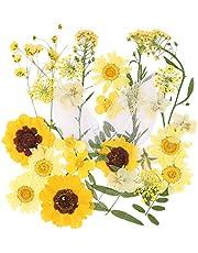VINFUTUR 35 stycken pressade blommor blad äkta torkade blommor naturliga blandade torkade blommor blad för gör-det-själv pyssel harts scrapbooking kort mobiltelefonfodral dekoration