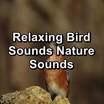Relaxing Bird Sounds Nature Sounds