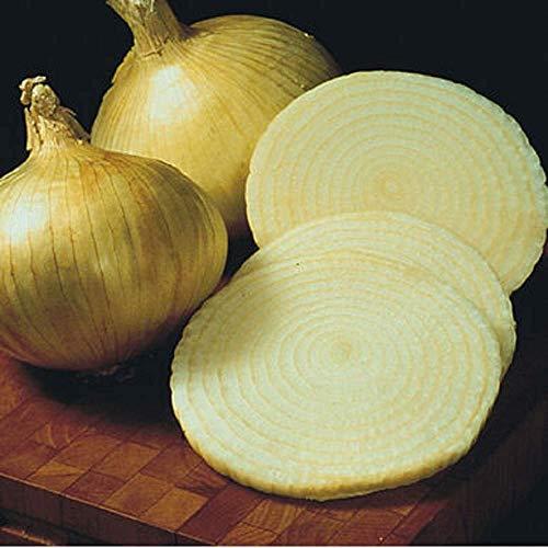 David's Garden Seeds Onion Short-Day Granex Yellow 6223 (Yellow) 200 Non-GMO, Hybrid Seeds