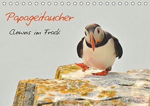 Papageitaucher - Clowns im Frack (Tischkalender 2019 DIN A5 quer): Den drolligen Dickköpfen ganz nahe (Monatskalender, 14 Seiten )