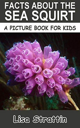 Facts About the Sea Squirt (A Picture Book For Kids 170)