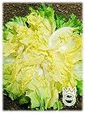 Indivia Scarola Gigante degli Ortolani Cichorium endivia Semi Semenze Ortaggi Orto Giardino